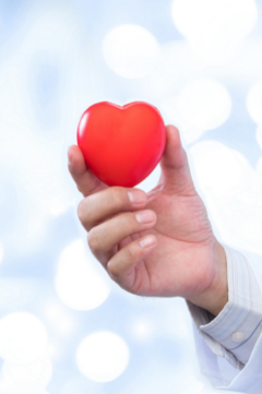 doctor holding rubber heart